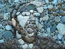 MR-RANDOM MOSAIC STYLE OUT OF BEACH ROCKS Do you LOVE it????!!!.