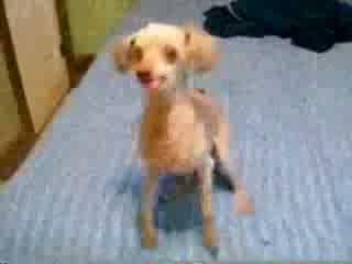 Creepy dog with a weird bark!