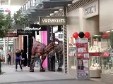 Velociraptor in Melbourne.mp4