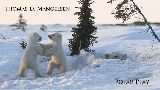 Tom Mangelsen - Polar Play