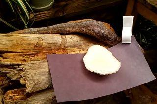 Oyster Mushroom Project 3